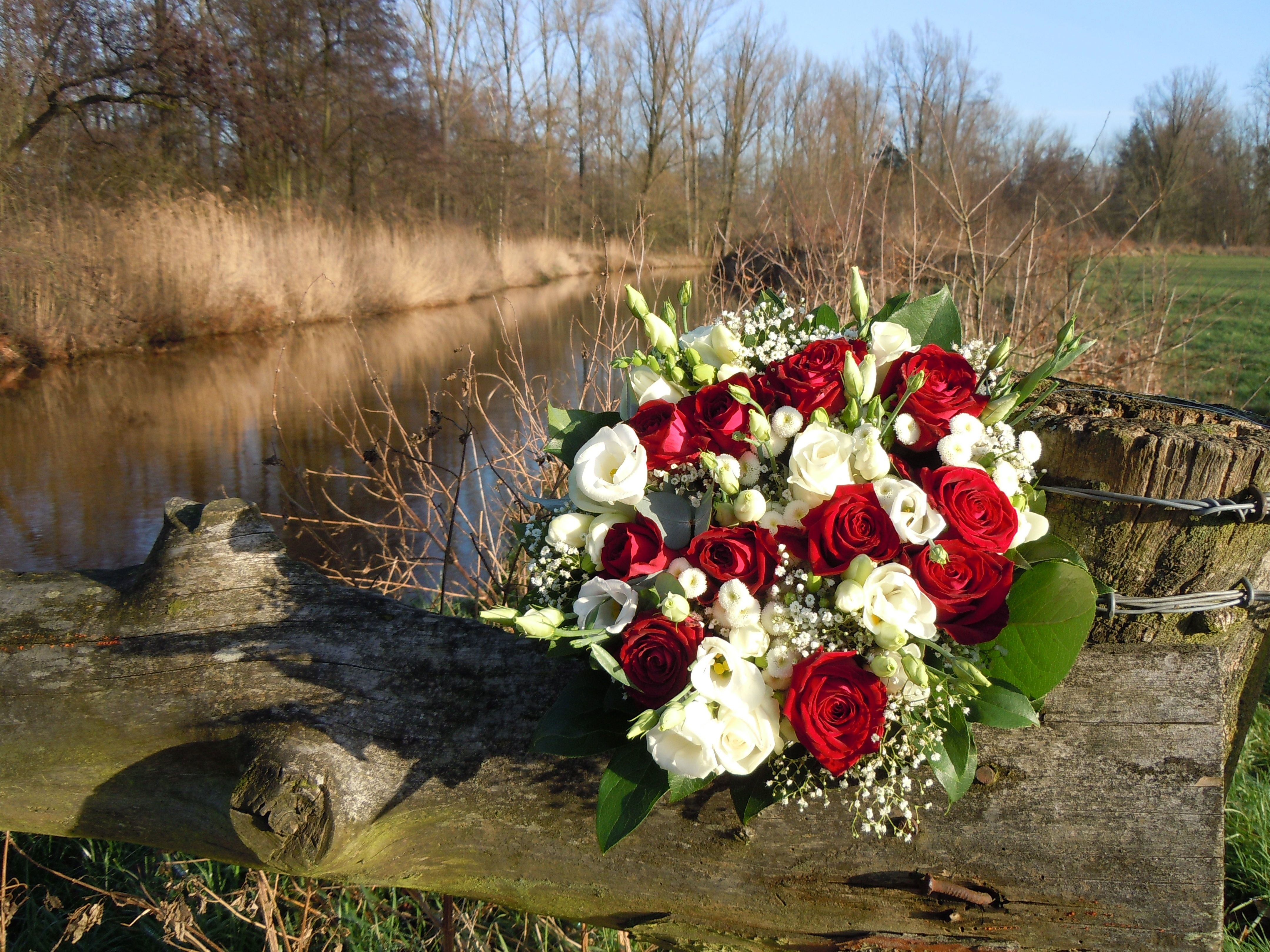 Image result for photos of red and white rose and baby's