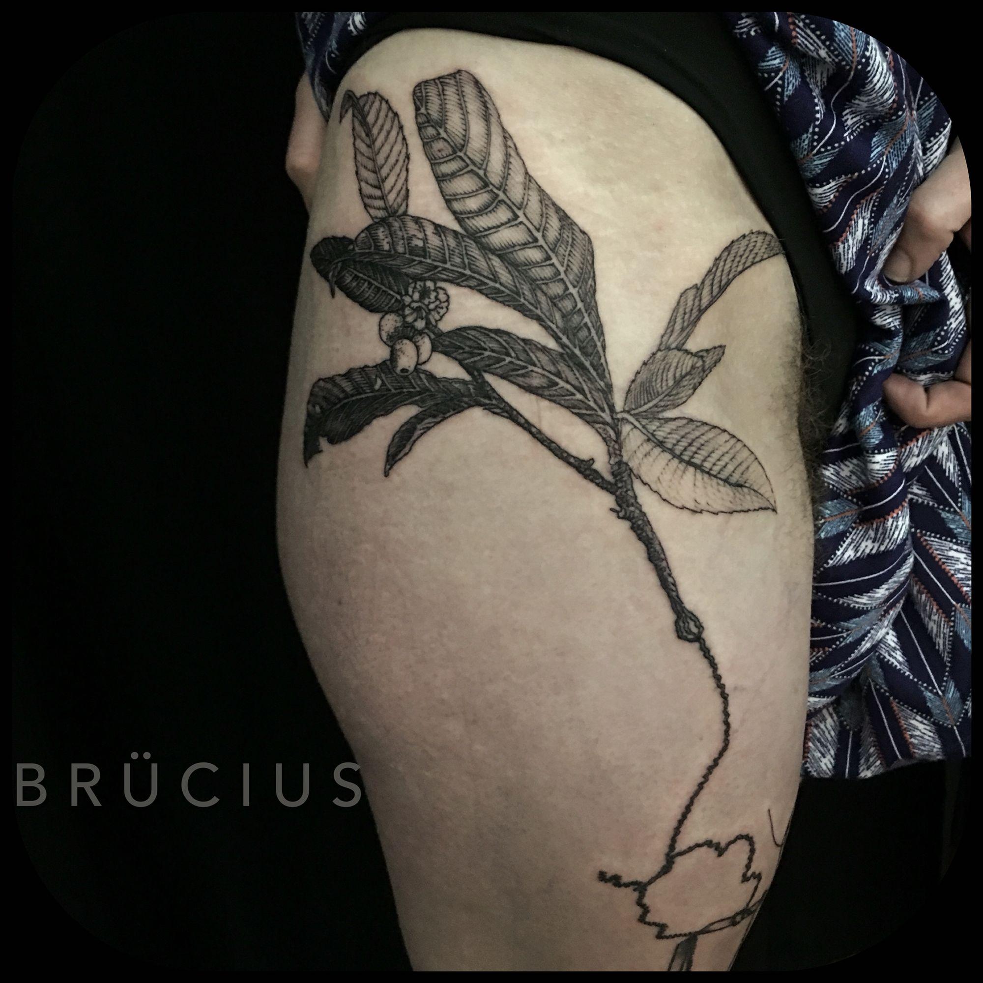 #BRUCIUS #TATTOO #SanFrancisco #bayareatattoo  #sciencetattoo #engravingtattoo #etchingtattoo #sculptoroflines #dotwork #blackworkartist #blackwork #ink #penandink #strings #loquat