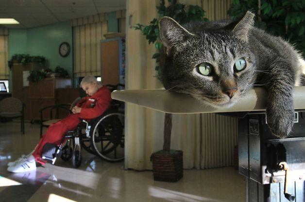 Miley VA Medical Center's healing pet cat Cats, Pets