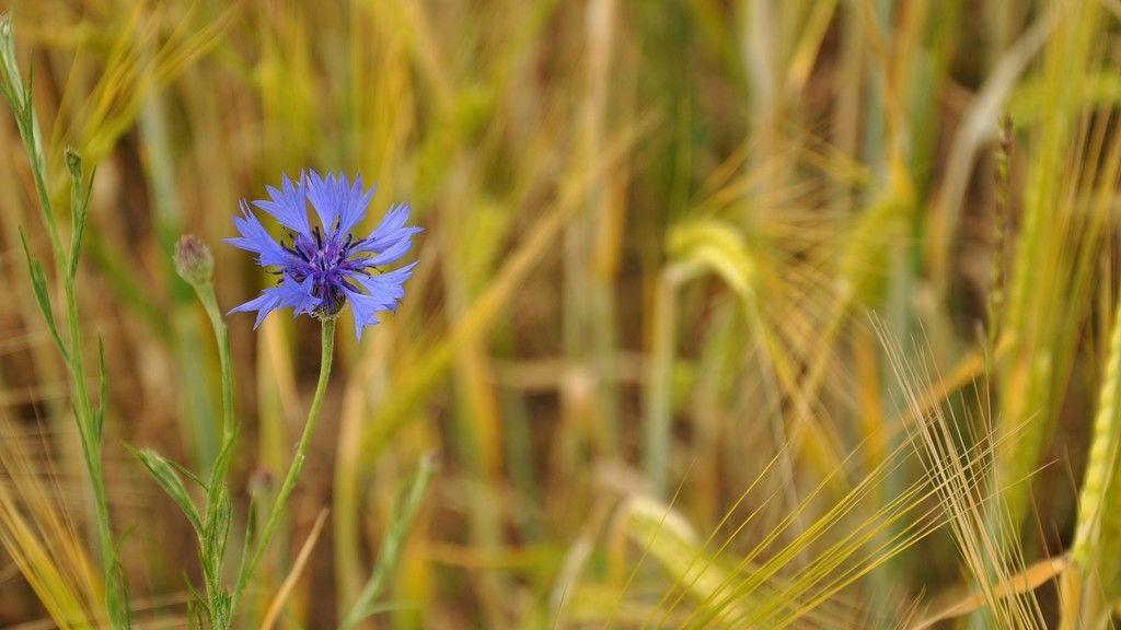 Lovely purple flower grass blur wallpaper purple