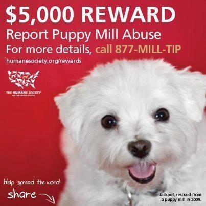Huge Reward From The Humane Society Of The United States