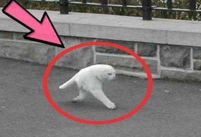 أغرب الصور فى العالم صور مضحكة وغريبة Video New Blog Posts Animals