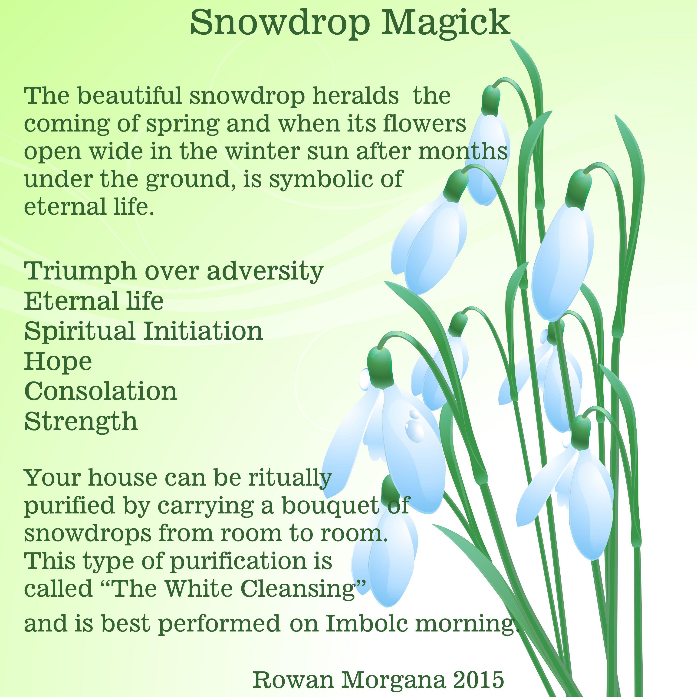 Snowdrop Magick Www Sacredwicca Com Magical Life Witch Books Magick