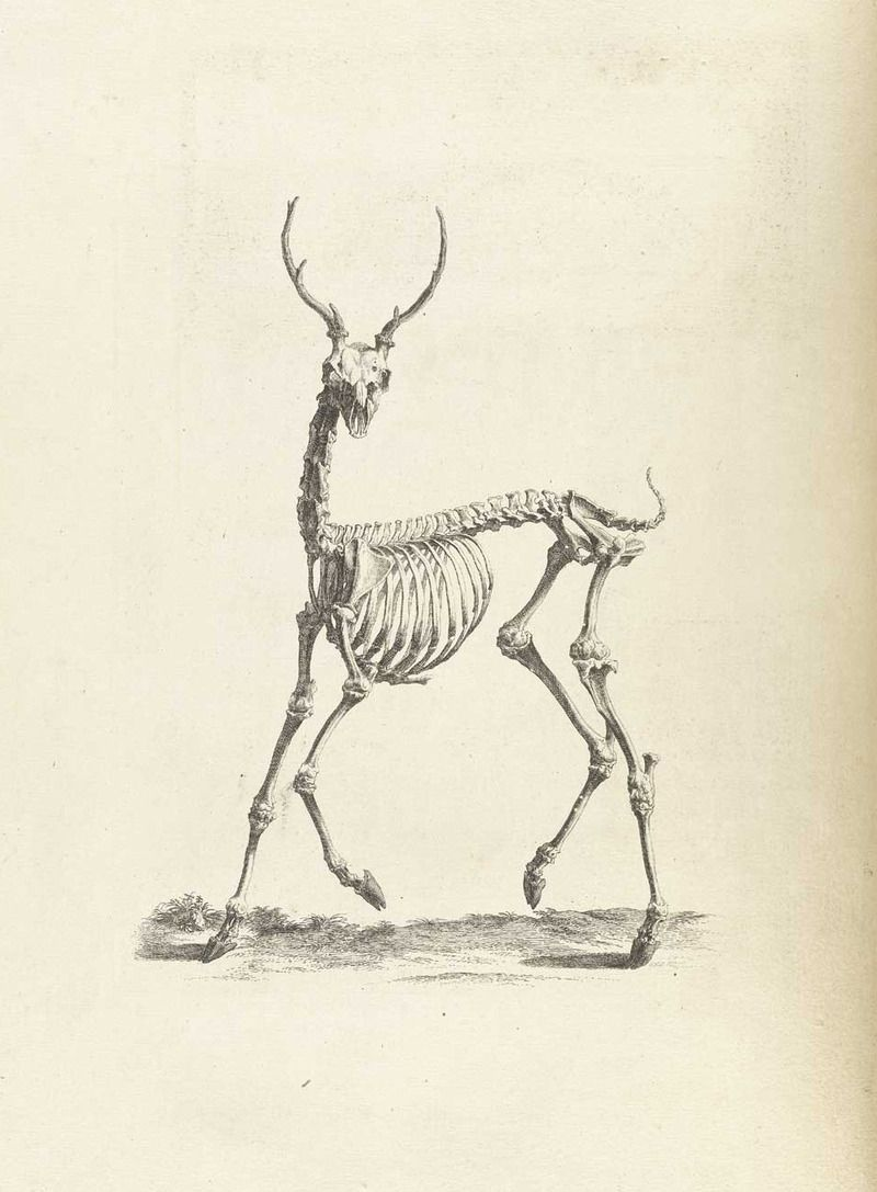 In The Good Old Days, Anatomy Drawings Were Full of Whimsy | Anatomy ...