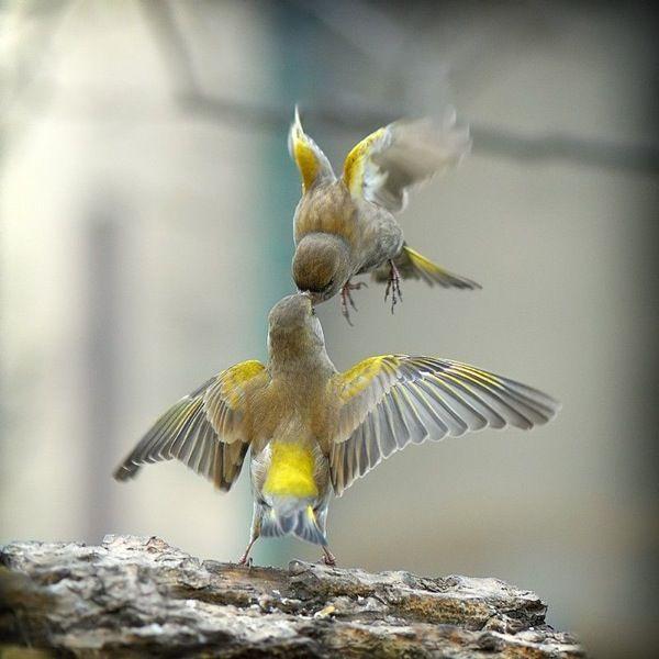 pico de pájaro