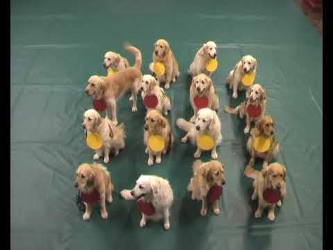 Puppies Explain Science Video Teaching Science Teaching