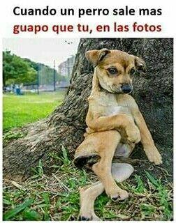Jajajaa Lenguaje De Los Perros Memes Perros Perros