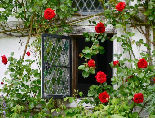 Brockhampton Estate, Herefordshire por Di en Flickr.