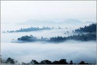 Anders Blomqvist - Morning mist over rainforest.