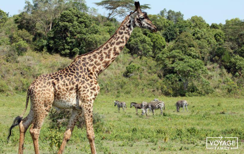 tanzanie avec des enfants safari