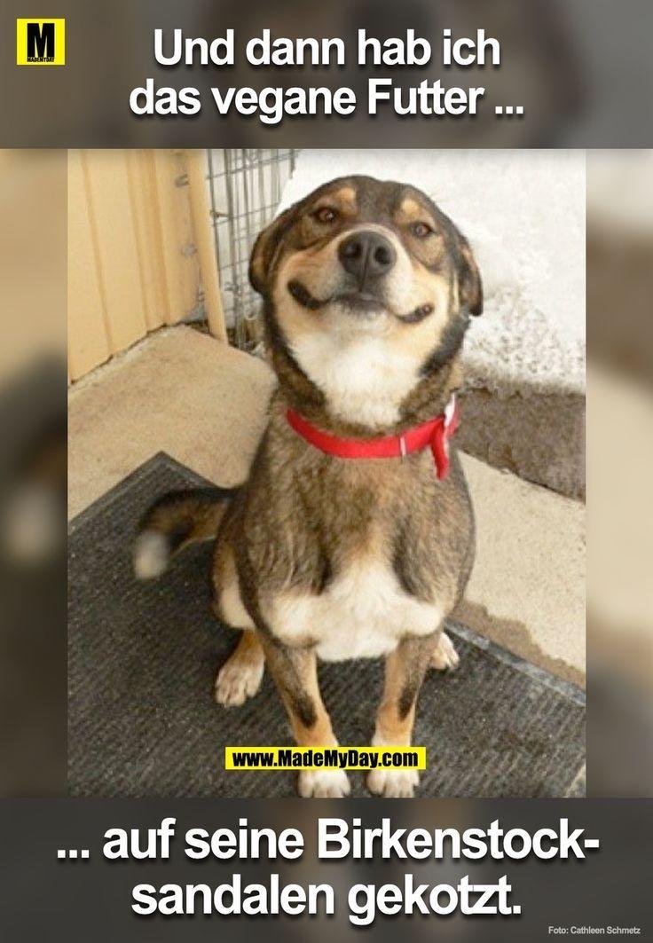 Guter Hund Alex S Katzen Lustige Spruche Hund Witze Lustige Hund Bilder