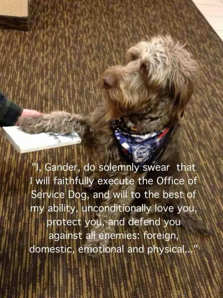 A Service Dog S Oath Service Dogs Quotes