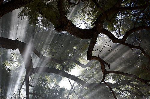 Light through the smoke