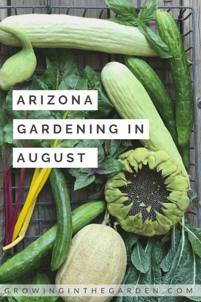 Arizona Garden In August Arizona Gardening Home Vegetable