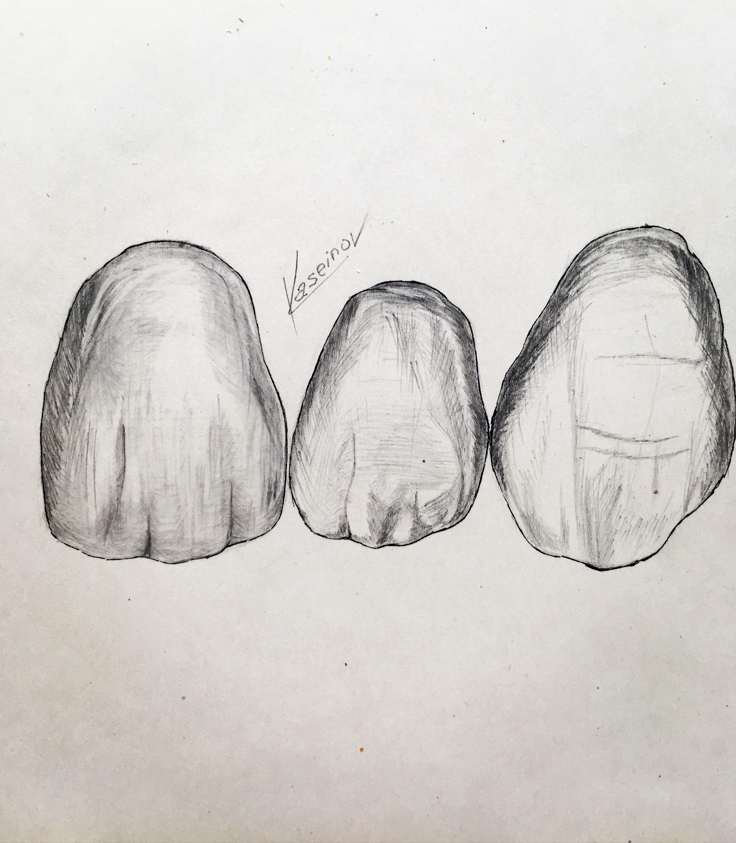 Pin De Danny Barro En Odontologia Arte Dental Anatomia Dental Diente Dibujo