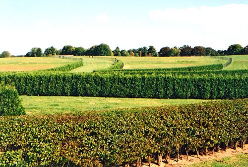 Osage Orange Fence