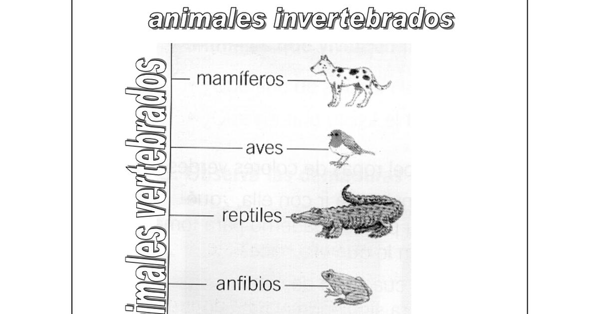 Dibujos Para Colorear De Animales Invertebrados Y Vertebrados: Animales Vertebrados E Invertebrados.pdf