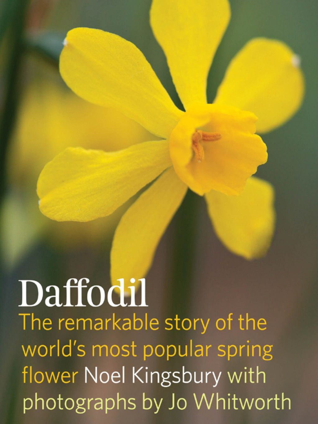 Pin By Aneethaam On Flowers With Images Daffodils Story Of