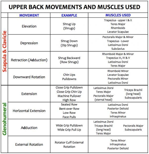 Routines for Developing a Strong and Healthy Upper Back A strong upper back is vital to minimize shoulder joint and girdle injuries. Strengthening these areas can be done with proper balance of pushing and pulling. Here are workouts for you to follow.A strong upper back is vital to minimize shoulder joint and girdle injuries. Strengthen...