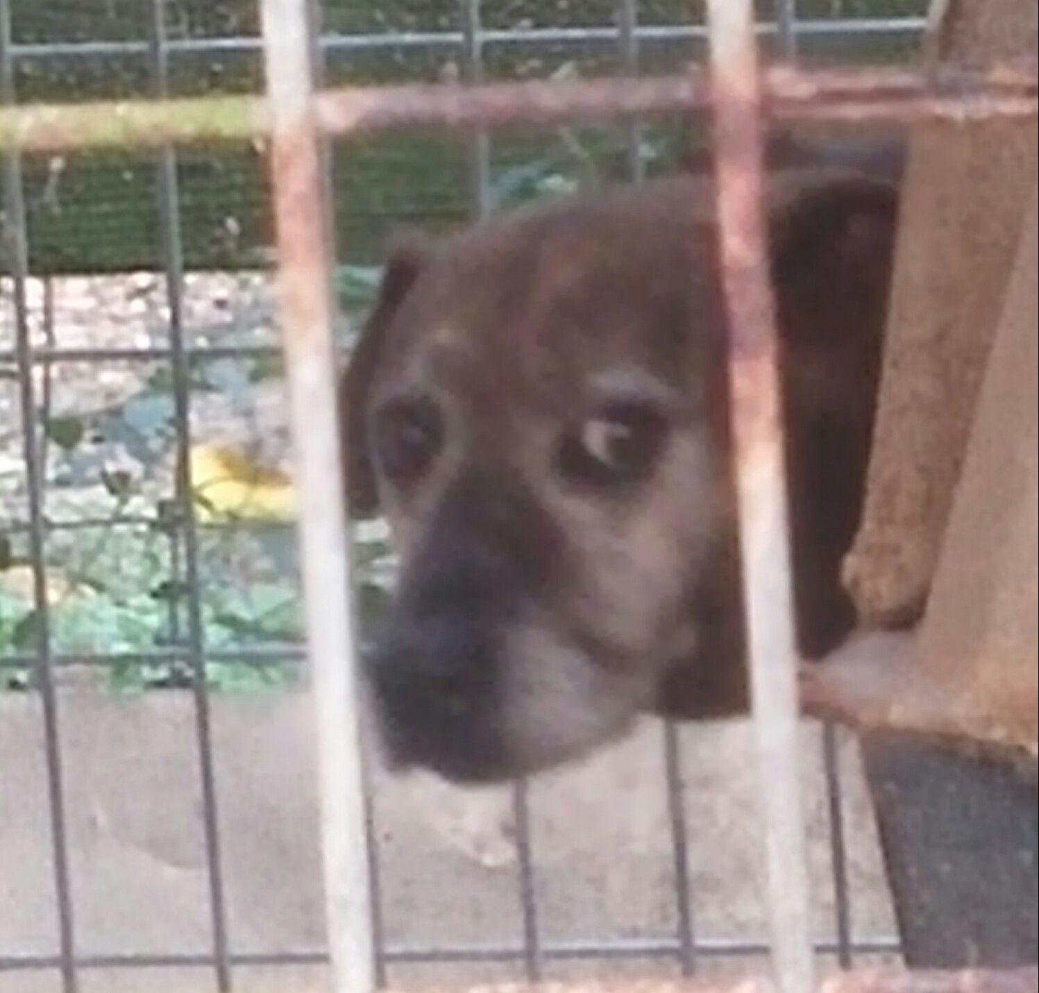 Adopt Hera On Dog Adoption Labrador Retriever Mix Animals