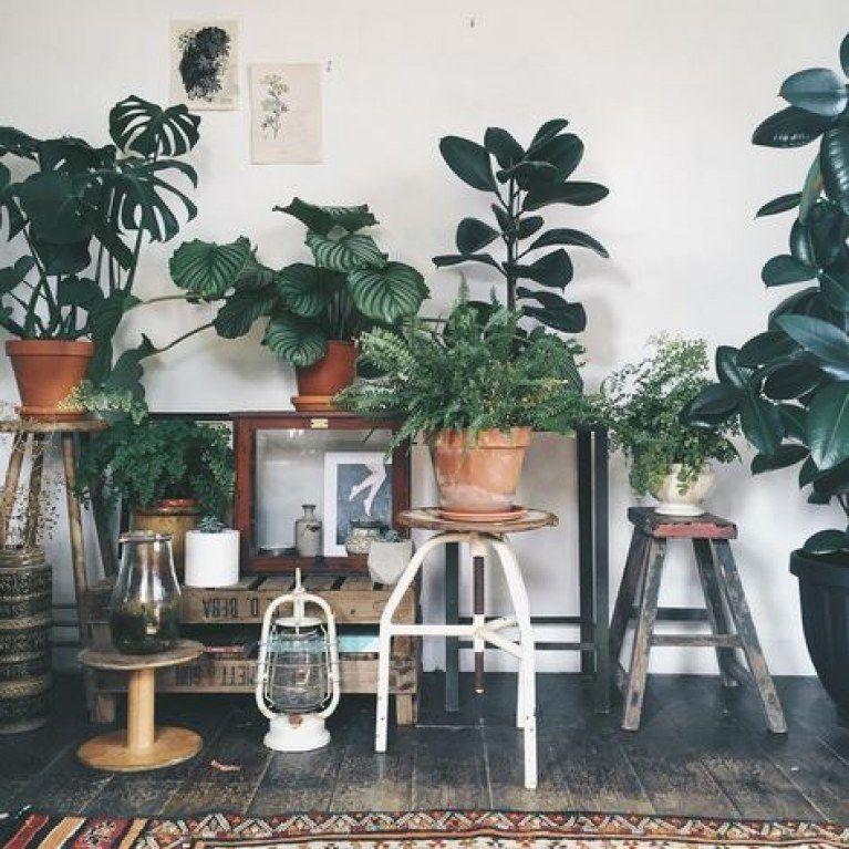Welche Pflanze für welches Zimmer? 7 geniale (und hilfreiche) Ideen! #dunkleinnenräume