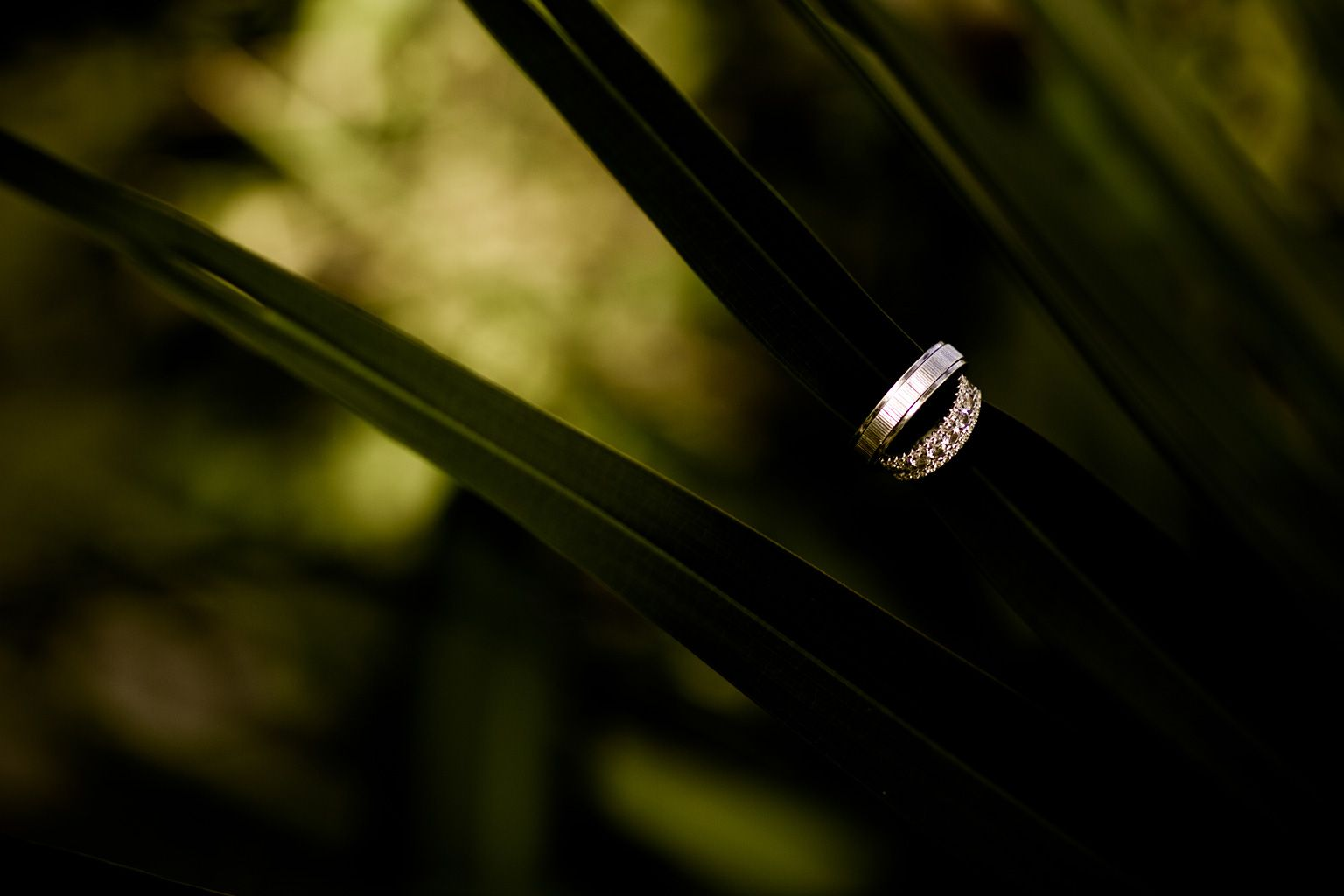 May your wedding rings represent a long never ending cycle of love and prosperity...