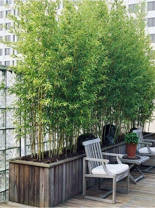 Bambus Garten Im Hause Wachsen Dachterrasse Dekoration For The