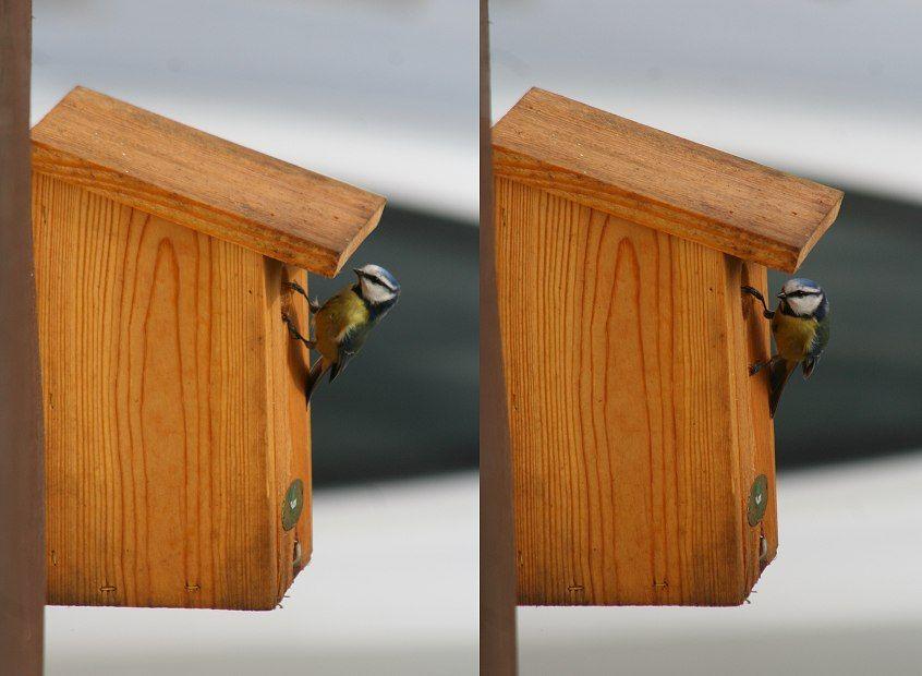 Exceptionnel Les 71 meilleures images du tableau Nichoirs pour oiseaux du  BI17