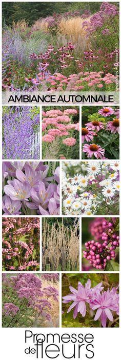 Floraison et intérêt automnal Massif de vivaces d/'automne