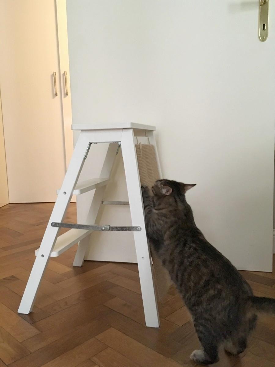 Kratz Trittleiter für Katzen   Frag Mutti   Katzen, Trittleiter ...