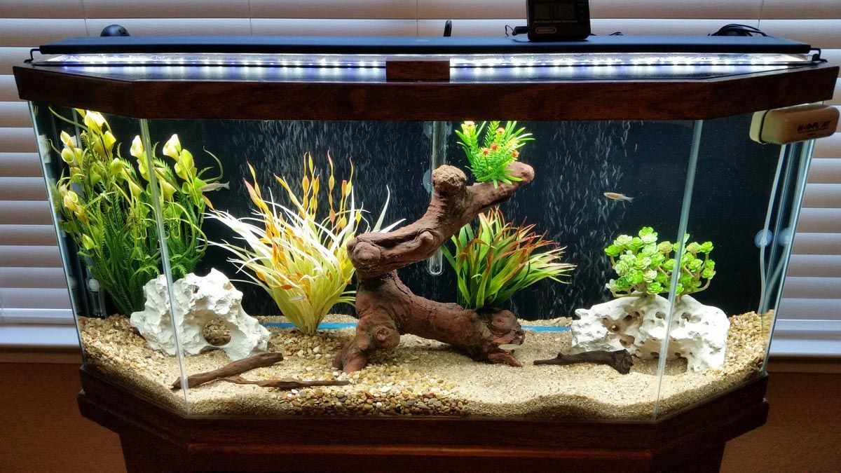 30 Gallon Freshwater Aquarium Setup | Aquarium Ideas | Pinterest ...