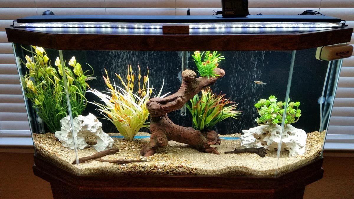 30 Gallon Freshwater Aquarium Setup Aquarium Setup Fresh Water