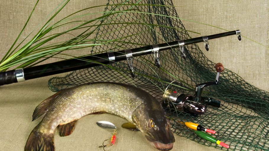 grass, pike, spinning, fish, tackle