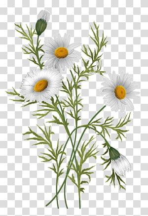 Pin By Farijazz On Flowers Visual Library Yellow Daisy Flower Daisy Art Family Flowers