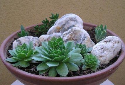 Cómo prevenir enfermedades en plantas suculentas - Bulhufas.es ...