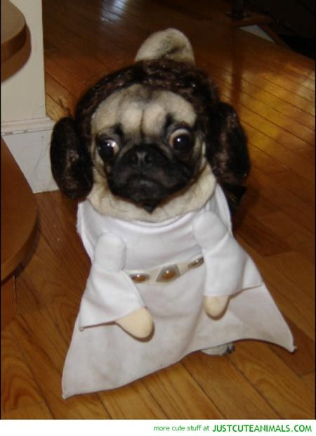 Dogs In Star Wars Costumes Darth Vader Yoda Ewok 29 Pictures