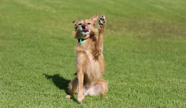 20 Unusual Tricks You Should Start Teaching Your Dog Today Your