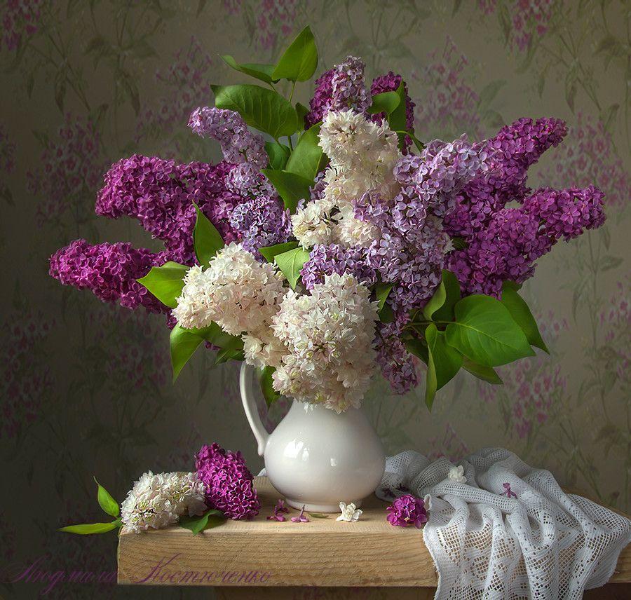 Pin By Nik On Snimki Natyurmortov Lilac Flowers Flower Painting Beautiful Flowers Wallpapers