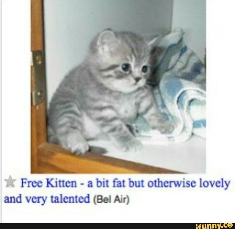 Top 10 Craigslist Cat Memes Cat Memes Cute Animals Cute Funny Animals