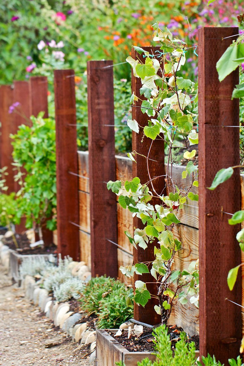 Attractive Wooden And Wire Trellis Might Want To Increase