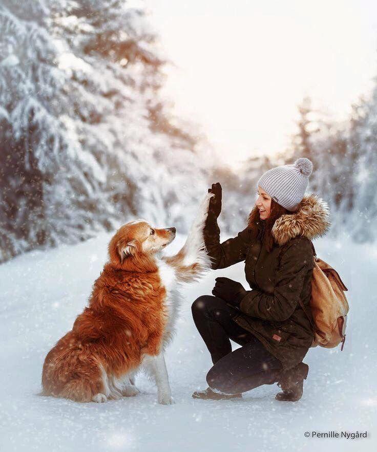Pin Von Moment S Auf Winter Wald Mit Bildern Madchen Und Hund Hunde Fotos Hundefotos