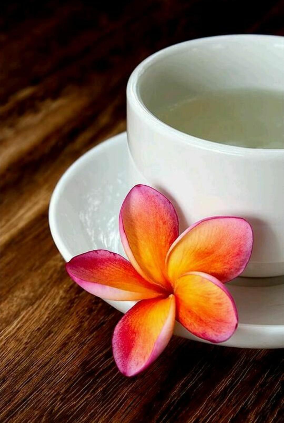 Pin By Teri White On Plumeria Cottage Hawaiian Tea Plumeria Chinese Tea