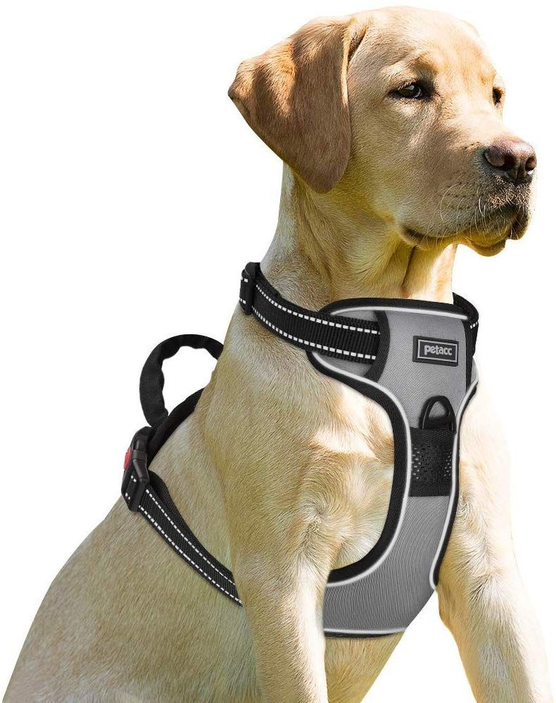 Dog Harness With Handle In 2020 Dog Harness Dogs Best Dogs