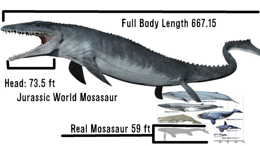 mosasaurus size - Google Search | prehistory | Pinterest
