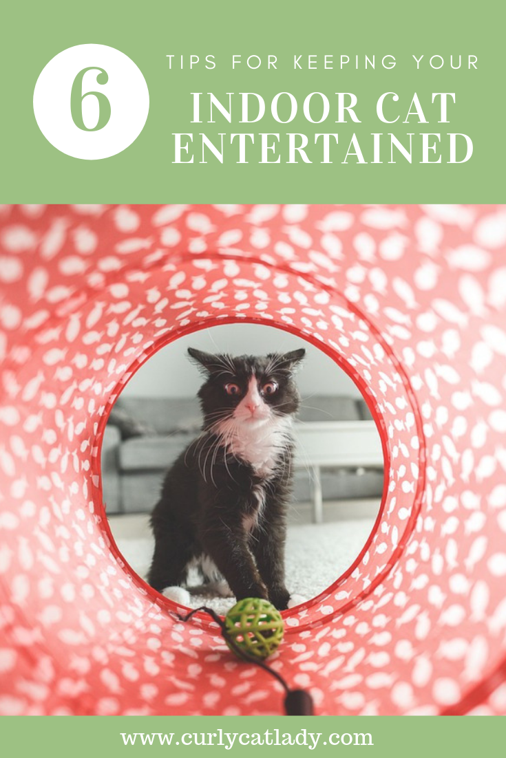 6 Tips For Keeping Your Indoor Cat Entertained Indoor Cat Cat Entertainment Cats