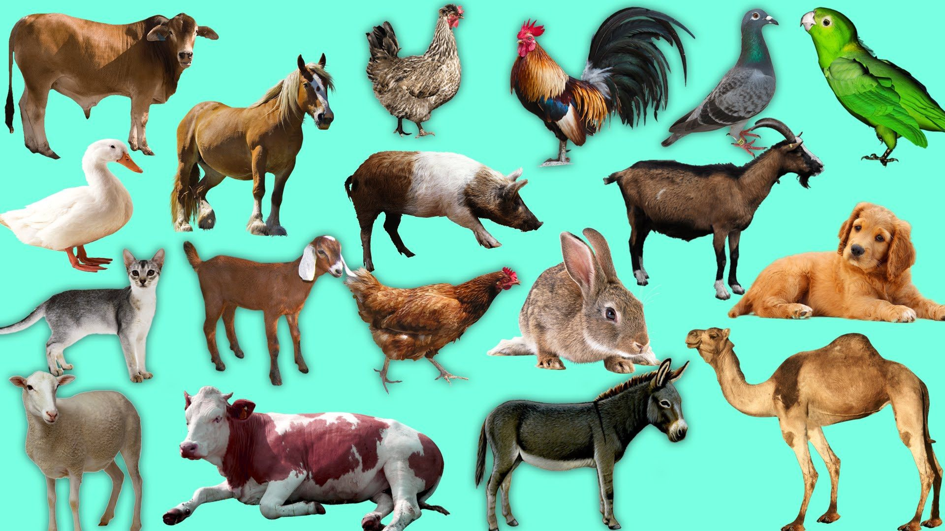 Learn About Domestic Animals Sounds Names For