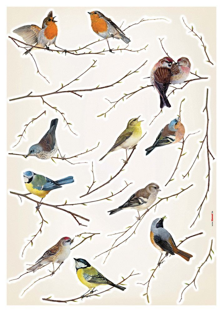 Erie Living Birds Wall Decal Moms Bird Decor Bird Wall Decals