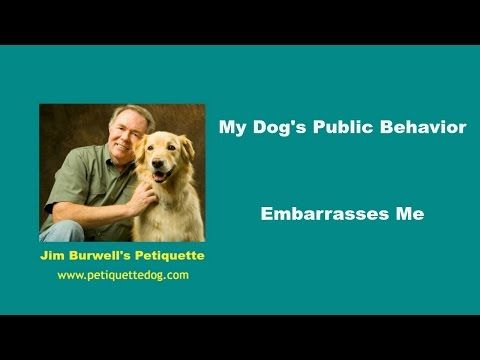 5 tips on fixing your out of control dog My Out of Control Dog Embarrases Me