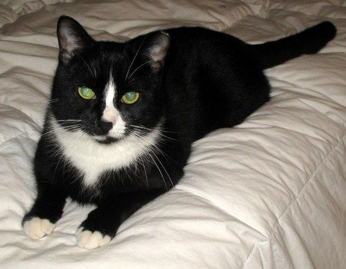 Find Your Perfect Pet Found Cat Lots Of Cats Pets