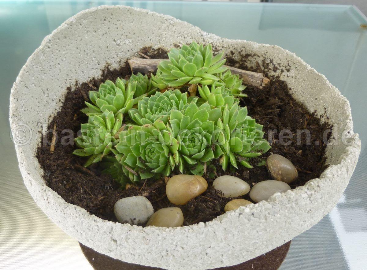 selbst gemachte betonkugel. bepflanzt mit dachwurz. deko für den, Garten seite